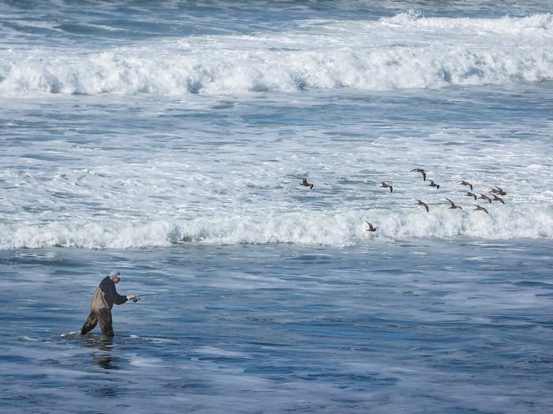 Fisherman and Birds on Ocean Beach, San Francisco CA
