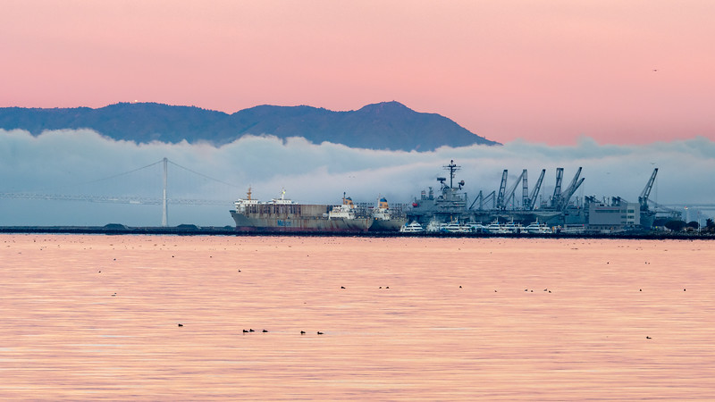 Waterfowl, Port of Oakland, Bay Bridge, Fog Layer, and Mt Tamalpais