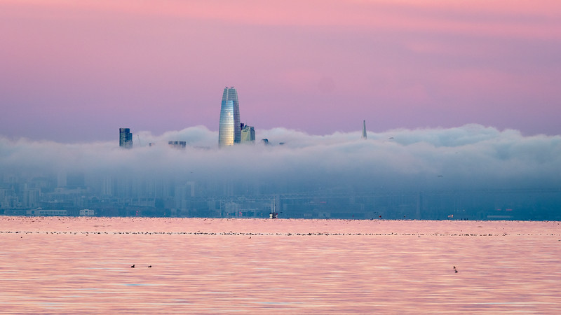 Sunrise Colors, Waterfowl, Fog, and Skyline