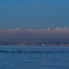 Waterfowl, Cargo Ship, and Skyscrapers Peaking Above Morning Fog
