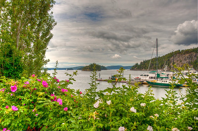 flowers-deer-harbor