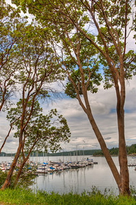 madorne-trees-westsound-harbor