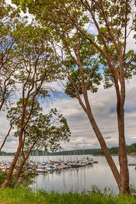 madorne-trees-westsound-harbor