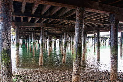 ferry-dock-pilings