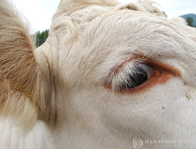 Kali's beautiful eye, Woodstock Farm Animal Sanctuary
