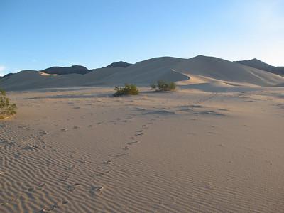 Ibex Dunes