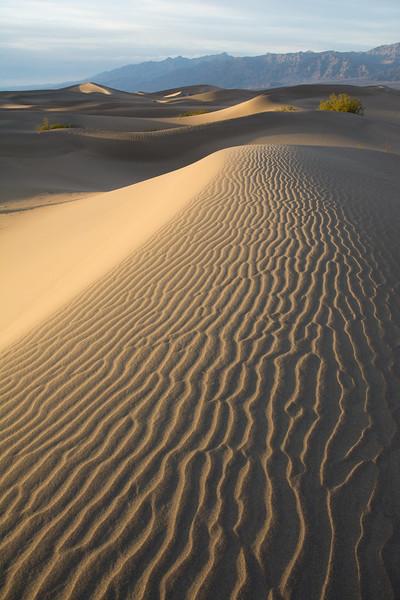 Barely Lit Dune
