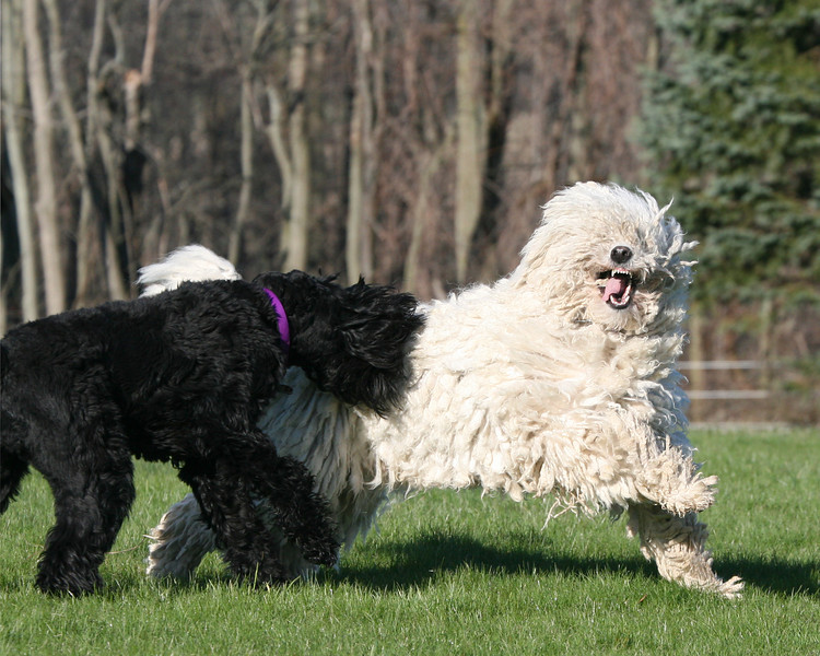 Tasha and Niea at play (Spring 2007)
