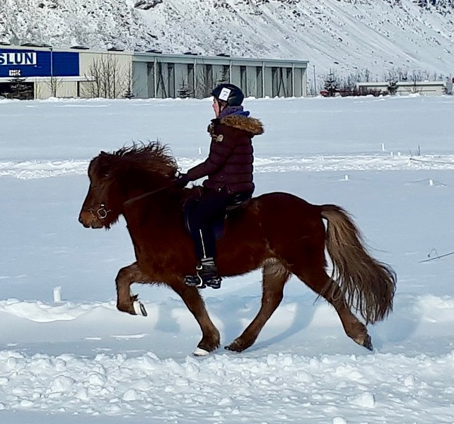 Competing in Iceland with a youth rider