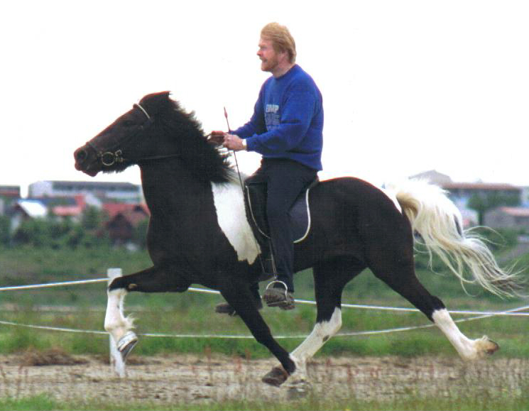 "In Iceland, ridden in flying pace by Sigurbjörn Bárðarson (""Diddi"") <i>photo:  unknown</i>"