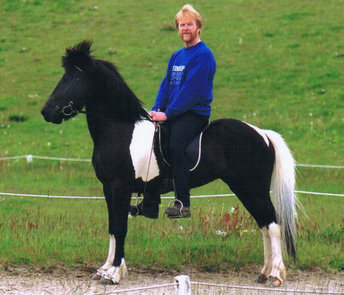 "In Iceland, ridden by Sigurbjörn Bárðarson (""Diddi"") <i>photo:  unknown</i>"