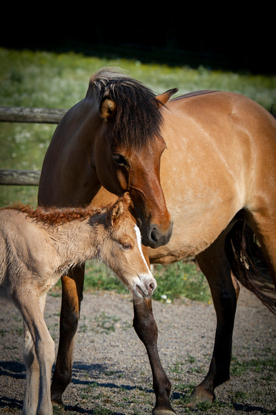 With her 2020 filly