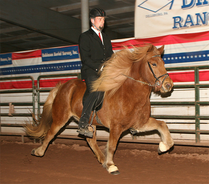 In tolt 2005 Northeast Gaited Show <i>(photo: Cramer Photography)</i>