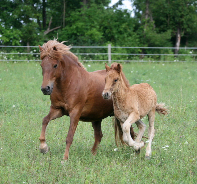 With her 2010 colt (Magni from Sand Meadow)<br /> July 2010