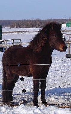 Sólon from Saskatchewan