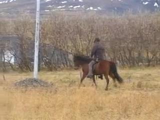 Orka frá Höfðabakka