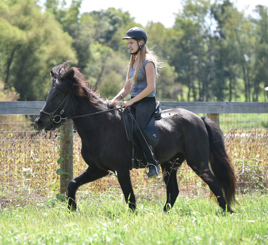 4 years old - ridden in tolt by Carrie Lyons Brandt <br><i>photo:   Shaila Sigsgaard</i>