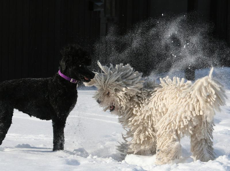 Tasha & Niea at play
