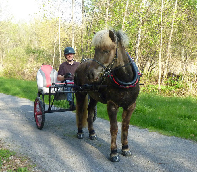 Out for an evening drive<br> <i>photo:  Andrea Barber</i>