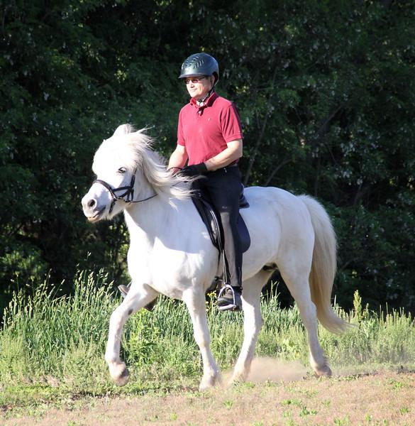Tolt (ridden with a bitless Lindell bridle)