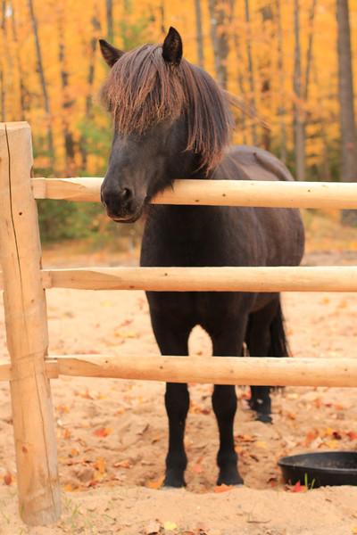 Oskar hanging out <i>photo: M. Ripple</i>