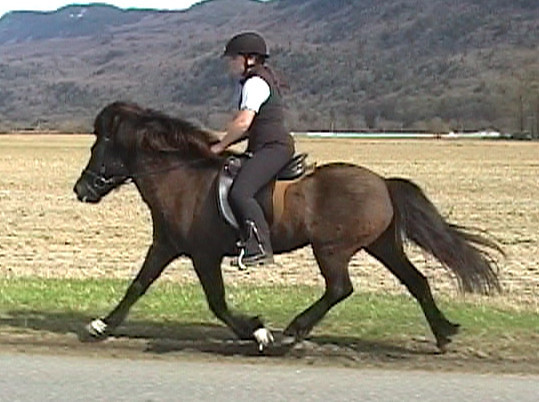 Trot (from video) 2009<br> <i>courtesy:  Nathaly Jones</i>