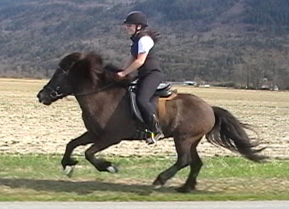 Canter (from video) 2009<br> <i>courtesy:  Nathaly Jones</i>