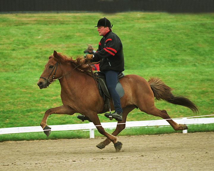 Sóla's dam - the 1st prize mare, Hera frá Hofi - in flying pace at Landsmót 2000