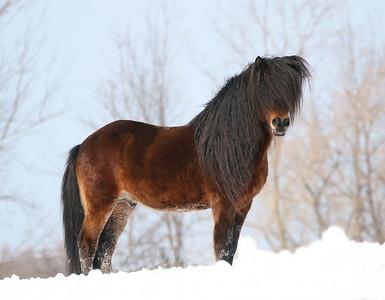 Current Stallions