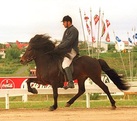 Tolt<br>Landsmót 2000