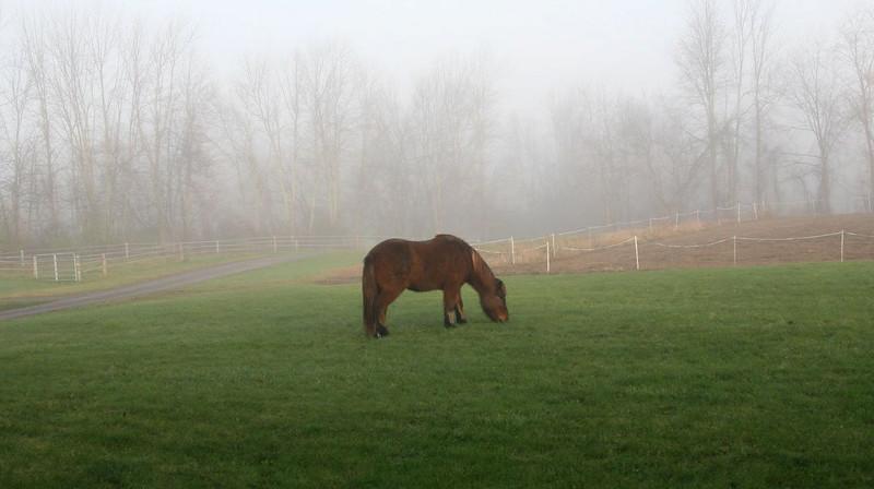 Last morning, November 2010