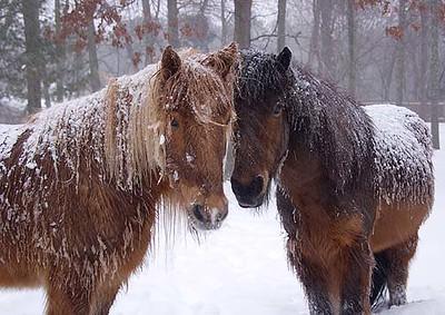 With Vikingur, Winter 2003