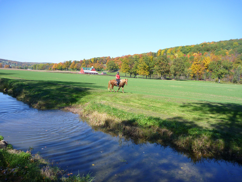 Andrea riding Vikingur Sugar Creek Farm - Ossian, NY October 2011 (<i>photo:  Steven Barber</i>)
