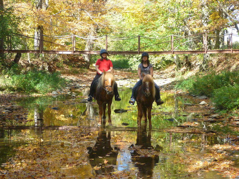 Andrea riding Vikingur - Cherrie riding Kraftur in Sugar Creek Ossian, NY October 2011 (<i>photo:  Steven Barber</i>)