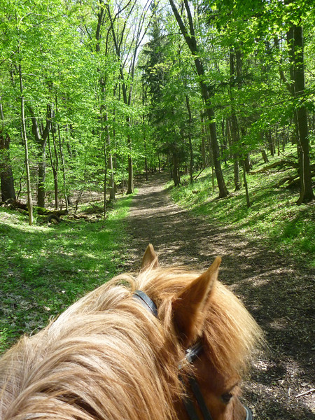 Riding Kraftur down the trail at Mendon Ponds Park<br /> May 2011