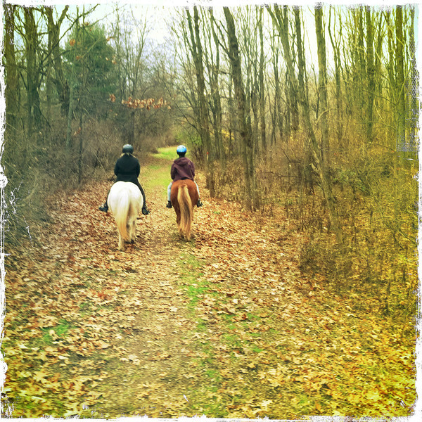 Andrea riding Steinrikur - Kestrel riding Kraftur Mendon Ponds Park December 2011 (<i>photo:  Steven Barber</i>)