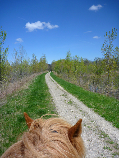 Riding Vikingur on the seemingly endless Genesee Valley Greenway Trail<br /> May 8, 2011