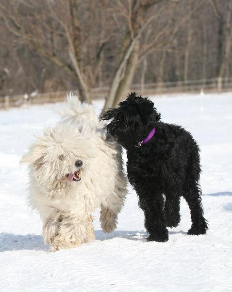 Niea & Tasha