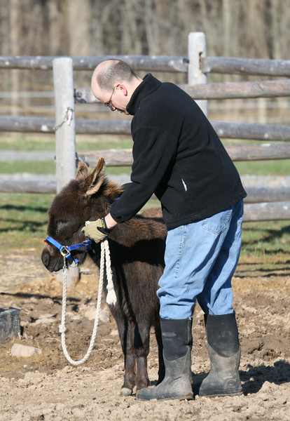 Steve and his wild donkey