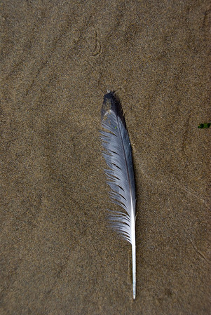 Sand, Rocks and Feathers