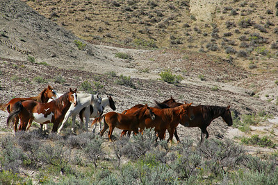 The Mighty Stallion Cherokee and his band
