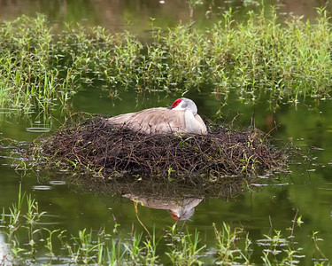 Nest in jeopardy of being flooded from rains.