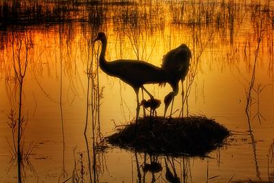 Sunset on Lake DuPont, Deltona, FL