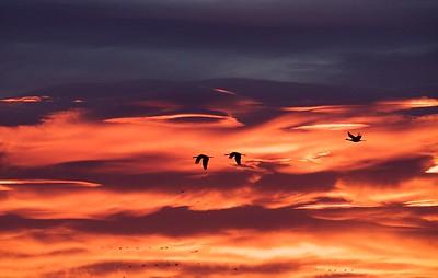 Sandhill Crane Migration in Monte Vista, CO
