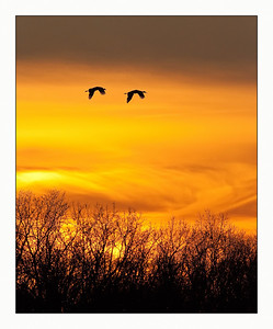 Sunset Sandhill Cranes Jasper-Pulaski Indiana