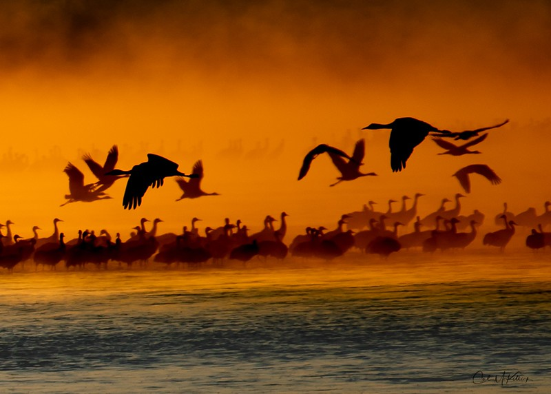 Cranes in Morning Mist