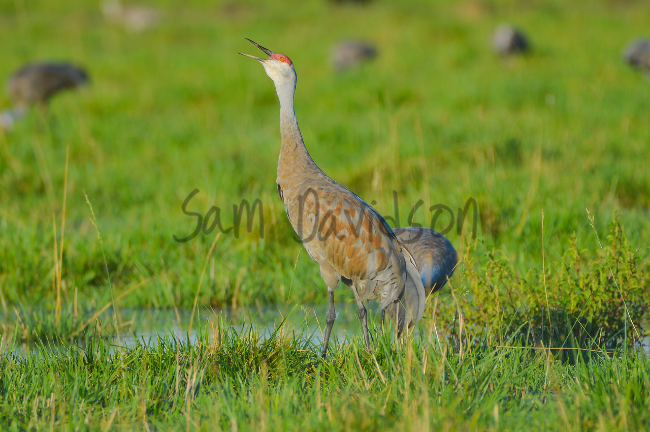Muddy Crane