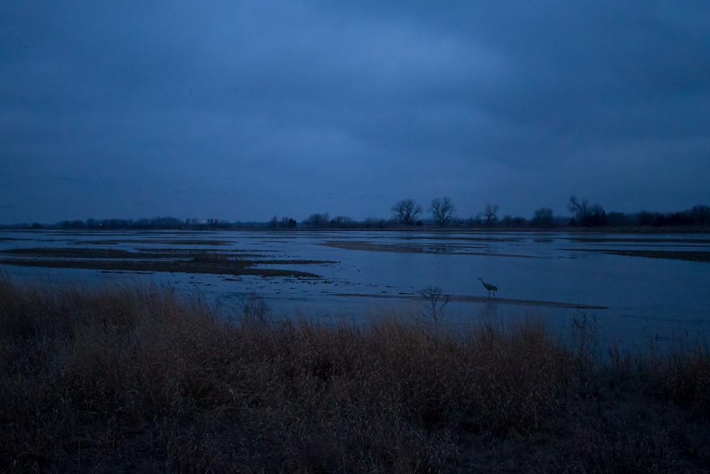 Nebraska cranes 26 (2013)