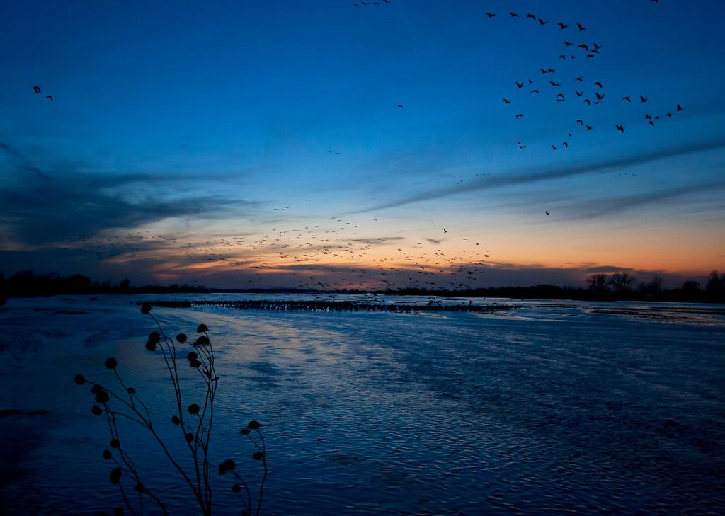 Nebraska cranes 21 (2013)