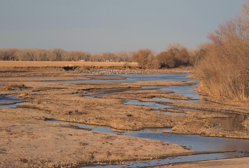Nebraska cranes 6 (2015)